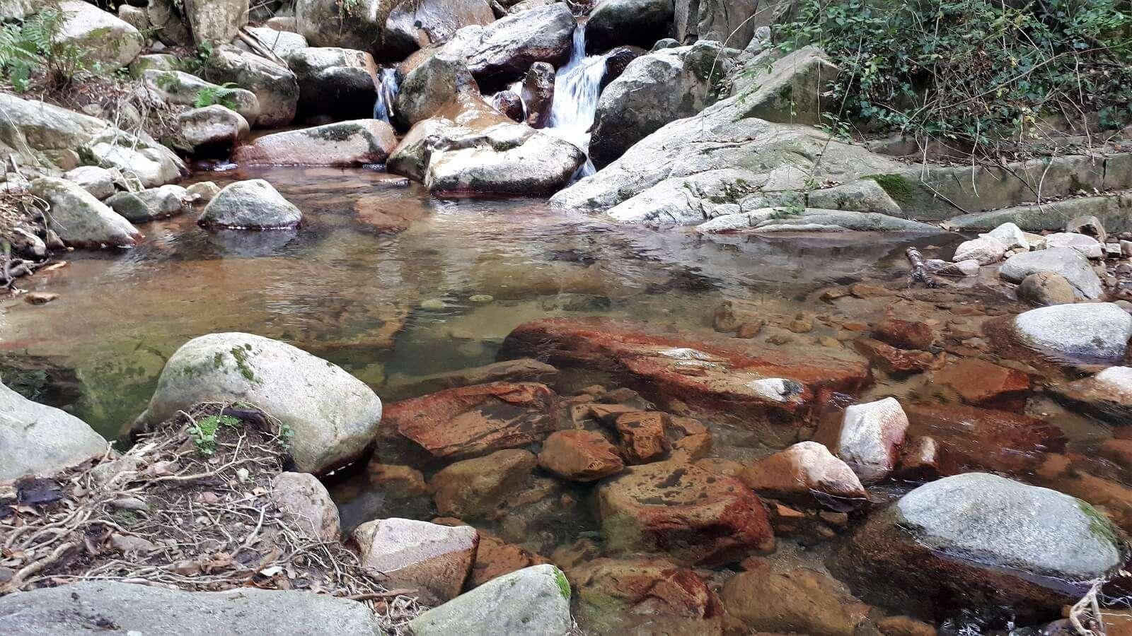 1600 riells selva montseny 2020-08-02_15-44-26