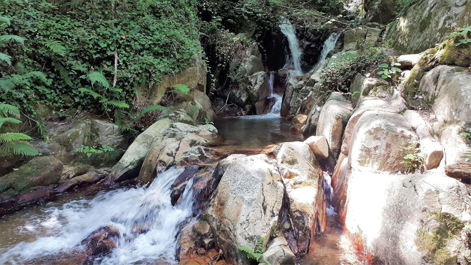 1600 riells selva montseny foto 2