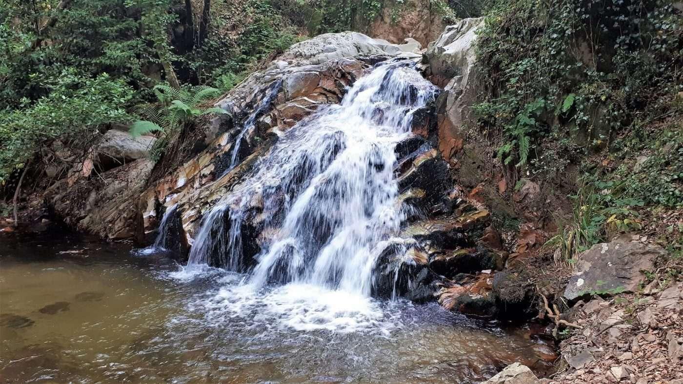 1600 APARADOR riells selva montseny foto 4