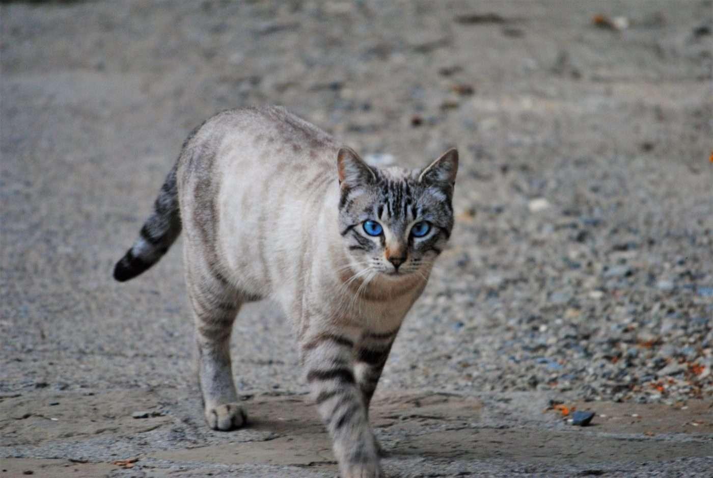 2000 gat cat patufet 1