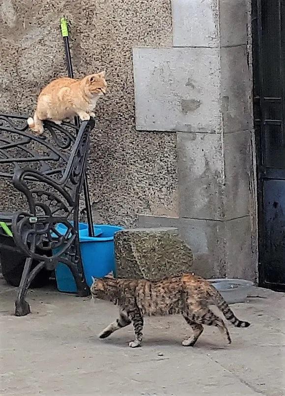 oris gats