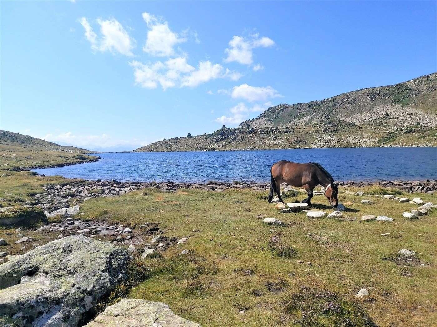 1400 APARADOR BACIVER HORSE 2021-08-26_15-18-53